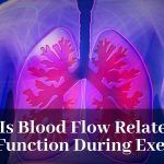 How Is Blood Flow Related To Lung Function During Exercise?