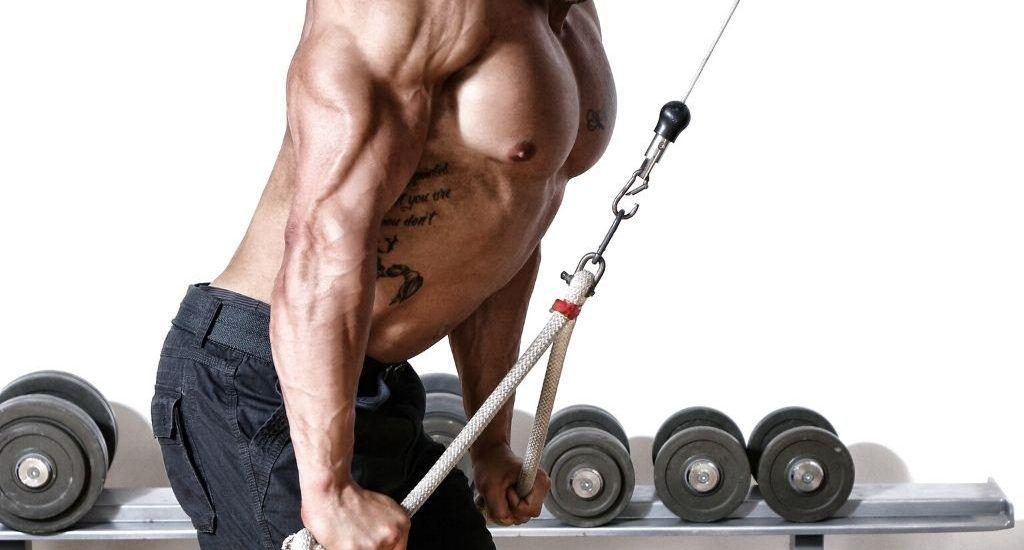 triceps vs biceps